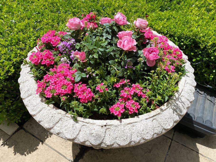 """5月31日まで。優雅な""""薔薇""""のメニューで心ときめく「ホテルニューグランド」のアフタヌーンティ【神奈川・元町中華街】"""