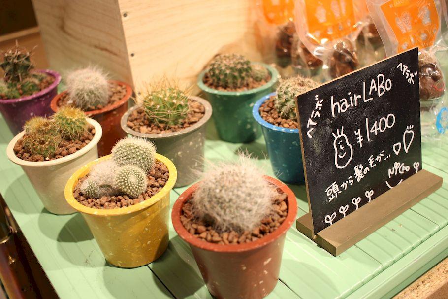 食べるバラ!? 横浜「ALL GOOD STORE」のスパイス香るボタニカルジェラートを実食!